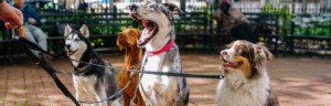 6 Hot Tips to Keep Your Dog Cool this Summer
